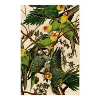 Vintage Papegaai Audubon Briefpapier