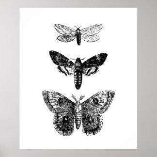 Vintage Vlinders Poster