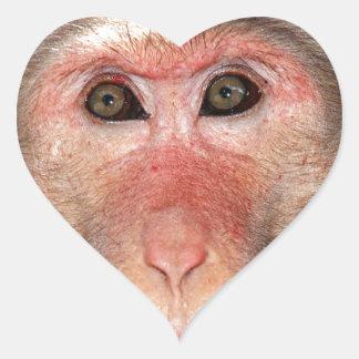 Visage d un singe adhésif