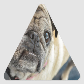 Visage de carlin sticker triangulaire