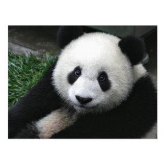 Visage de panda carte postale
