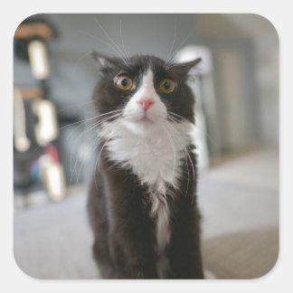 Visage drôle de chat sticker carré
