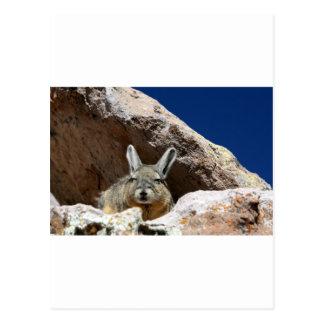 Viscacha prenant un bain de soleil dans le désert carte postale
