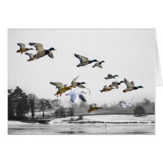 Voler de canards carte