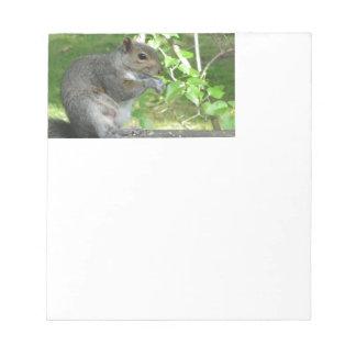 Voleur d'écureuil bloc-note
