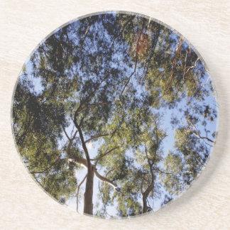 Voûte d'eucalyptus dessous de verre en grès