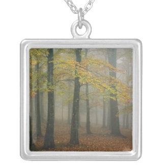 Vue d'automne de forêt brumeuse, grand-père 3 collier