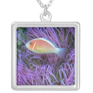 Vue de côté d'un poisson d'anémone rose, collier