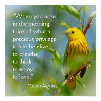 Wanneer u zich Marcus Aurelius Inspiration Quote Poster