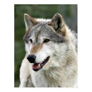 Wolf Briefkaart