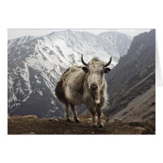 Yaks au Népal Carte
