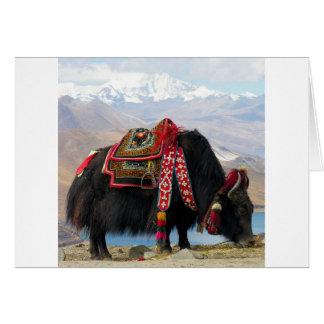 Yaks tibétains carte