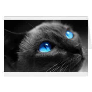 Yeux bleus siamois carte