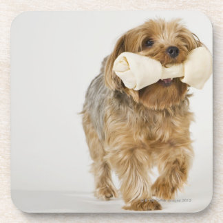 Yorkshire Terrier sur la marche blanche d'arrière Sous-bocks