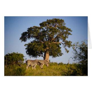 Zèbres, Botswana, Afrique, carte de voeux