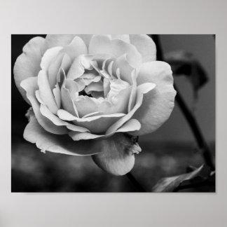 Zwart-witte Romantisch nam toe Poster