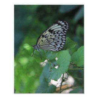 Zwart-witte Vlinder Foto Afdruk